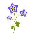 aquilegia flower flat icon wild flowers plant vector image vector image