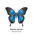 butterfly on white background vector image vector image