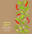 cayenne pepper background vector image