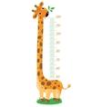 Giraffe meter wall vector image vector image