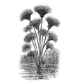 Vintage Papyrus Sketch vector image