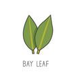 bay leaf line cooking vector image vector image