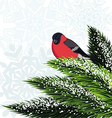 Bullfinch sitting on branch pine vector image