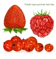 Fresh ripe summer berries vector image vector image