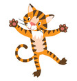 funny tiger standing on hind legs vector image