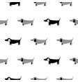 german badger-dog silhouette seamless vector image vector image