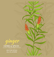 ginger background vector image vector image