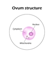 The structure of the ovum Infographics vector image vector image