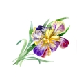 Watercolor garden Iris flowers isolated on white