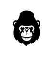 gorilla head logo vector image vector image