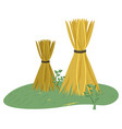 haystack on grass wheat harvest farmland vector image