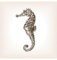 Sea horse hand drawn sketch vector image vector image