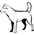 huskies dog vector image