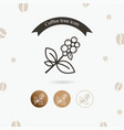 coffee plant icon vector image