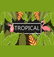 flamingo tropical banner vector image vector image