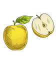 yellow apple with leaf half of apple vector image