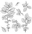bush branch set vector image vector image