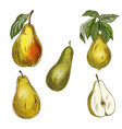 five pears design elements vector image vector image