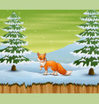 fox in winter forest hunting a prey vector image vector image