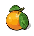 fresh ripe orange with leaves vector image vector image