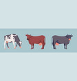 set of stickers with cows vector image