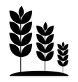Wheat germ icon simple style vector image vector image