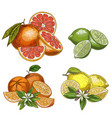citrus fruits with halves and flowers vector image