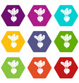 fresh beetroot icon set color hexahedron vector image vector image