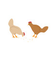 hens eating seeds set in cartoon style vector image