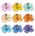 multicolored tropical flowers hibiscuses isolated vector image