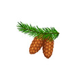 pine cone or pinecone on fir tree branch forest vector image