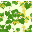 seamless texture branch tilia-linden tvig vector image