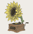 vintage phonograph with sunflower vector image