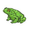 hallucinogenic toad sketch engraving vector image