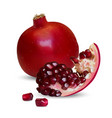 a realistic pomegranate vector image