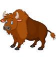cartoon happy bison vector image