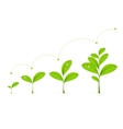 Phases Green Plant Growing vector image