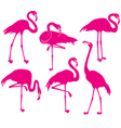 Set of silhouette of flamingoes