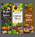 spices culinary herbs cooking herbal seasonings vector image vector image
