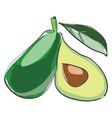 small avocado or color vector image vector image