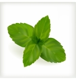 Fresh mint leaves vector image vector image
