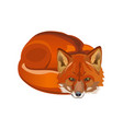 red fox curled up vector image