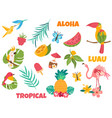 big set tropical birds and elements vector image