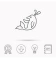 Dolphin icon Cetacean mammal sign vector image vector image