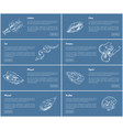 scallop and oyster posters set vector image