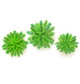 Set of green palm trees 3d