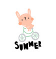 summer bunny vector image