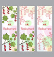 herbal tea collection red currant banner set vector image vector image