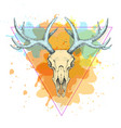 hipster animal skull on watercolor background vector image vector image