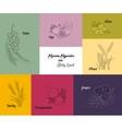 Seven species of the Holy Land Jewish holiday vector image